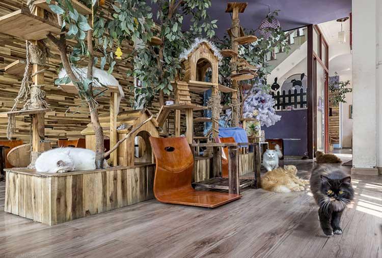 Ailu Cat House Cafe 1