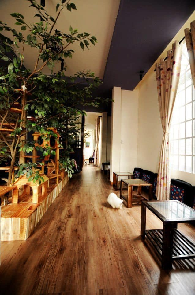 Ailu Cat House Cafe 2