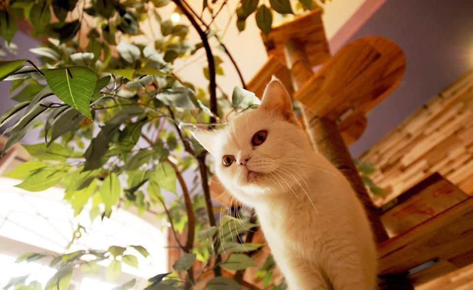 Ailu Cat House Cafe 3