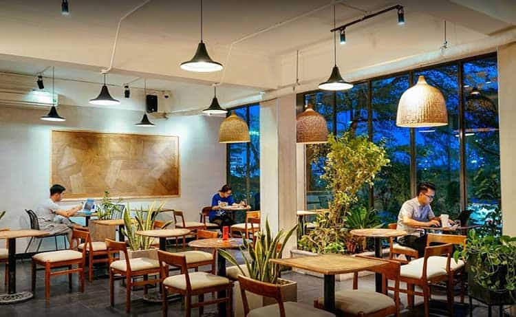 The Coffee House hoa hong 1
