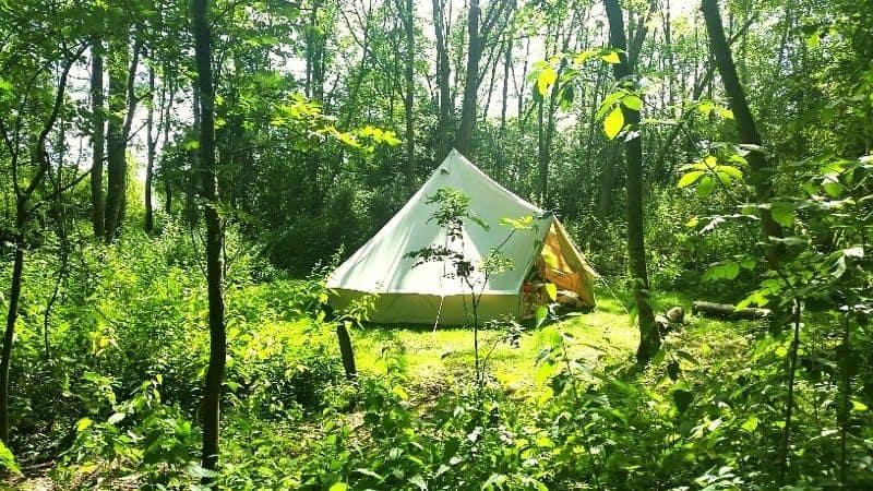 Kinh nghiệm cắm trại trong rừng