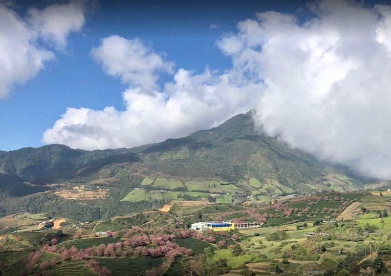 o long tea hills sapa 3