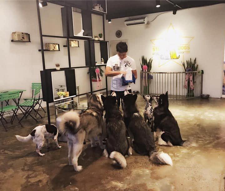 stardog cafe 2