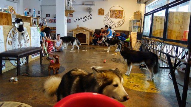 stardog cafe