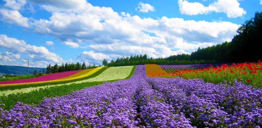 thanh pho ngan hoa da lat